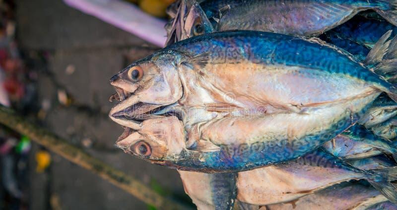 Świeży rybi rynek w Peru fotografia royalty free