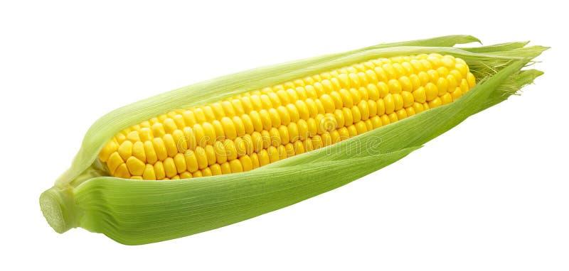 Świeży ucho odizolowywający na białym tle kukurudza zdjęcia stock