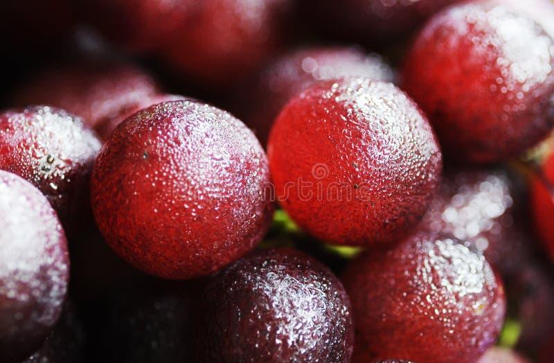 Świeży winogrono obraz royalty free