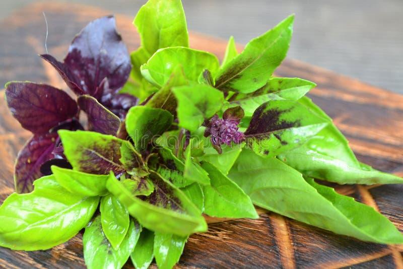 Świeży ziele basil na nieociosanej drewnianej tnącej desce Świeżego lata kulinarni składniki ?ywno?? organiczna dieta zdrowa obraz stock