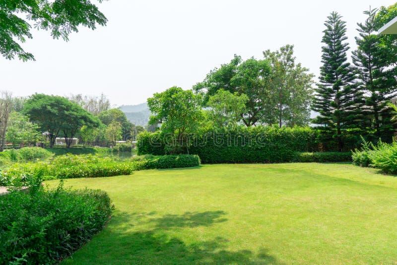 Świeży zielonej trawy gładki gazon jako dywan z krzywy formą krzak, drzewa na tle, dobrzy utrzymań lanscapes w ogródzie zdjęcia royalty free