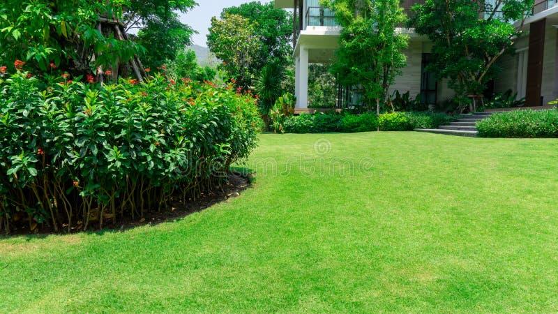 Świeży zielonej trawy gładki gazon jako dywan z krzywy formą krzak, drzewa na tle, dobrzy utrzymanie krajobrazy w ogródzie obraz royalty free