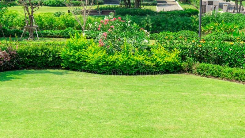 Świeży zielonej trawy gładki gazon jako dywan z krzywy formą krzak, drzewa na tle, dobrzy utrzymanie krajobrazy w ogródzie obrazy royalty free