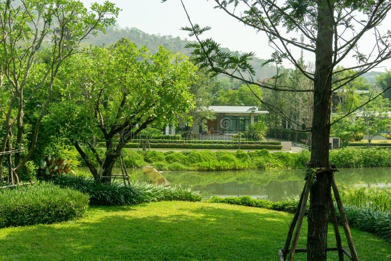 Świeży zielonej trawy gładki gazon jako dywan z krzywy formą krzak, drzewa na tle, dobrzy utrzymanie krajobrazy w ogródzie zdjęcia royalty free