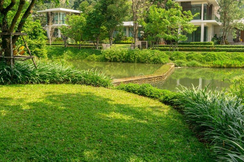 Świeży zielonej trawy gładki gazon jako dywan z krzywy formą krzak obok jeziora, drzewa na tle, dobry utrzymanie zdjęcia stock