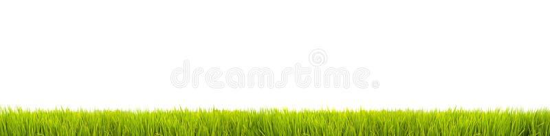 Świeży zielonej trawy panoramy wielki sztandar jako ramy granica w bezszwowym pustym białym tle fotografia royalty free