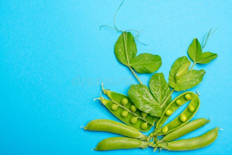 Świeży zielony dojrzały cukier chapie up, słodkich grochów kopii przestrzeni zakończenie dalej zdjęcia stock