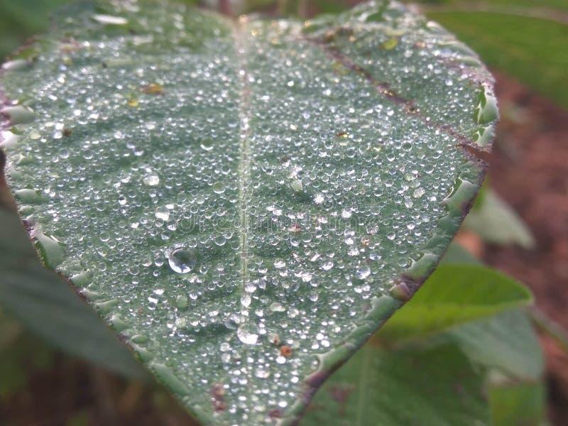 Świeży zielony liść z krystalicznymi rosa kroplami zamyka widok fotografia stock