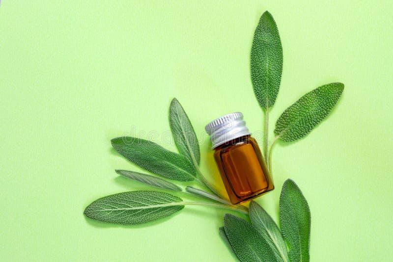 Świeży zielony mądry zielarski liść z butelką istotny olej na zielonym tle, zielarski esencji pojęcie obrazy stock