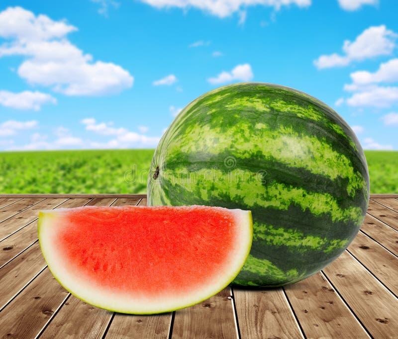 Świeży zielony melon obraz royalty free