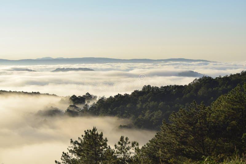 Świeży zielony sosnowy las i księżyc na niebieskiego nieba tle przy ranek częścią 6 zdjęcie royalty free