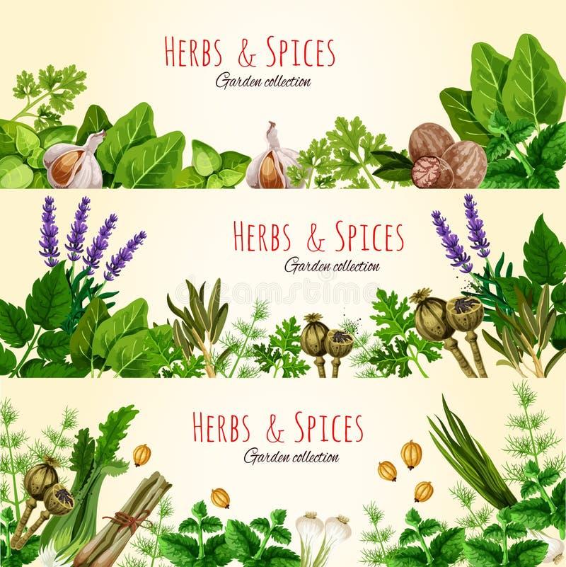 Świeży zielony ziele i pikantność sztandaru set ilustracja wektor