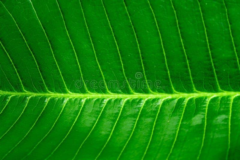 Świeży, zielony, zwarty widok tła, poziomy, zielony liść i punkt skupienia zdjęcie royalty free