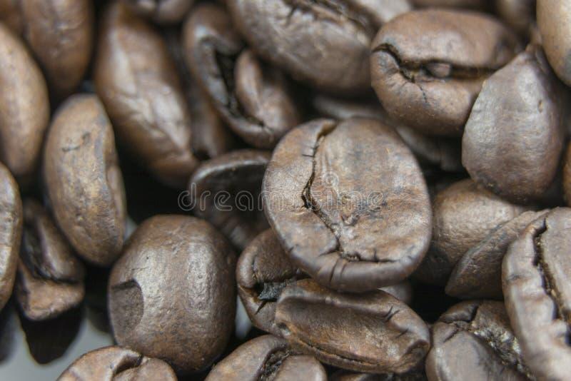 Świeżych kawowych fasoli zamknięty up fotografia stock