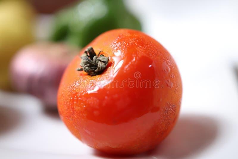 świeżych pomidorów fotografia royalty free