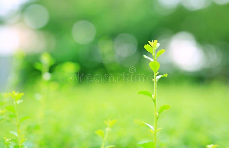 Świeżych potomstw drzewa wierzchołka zielony liść na zamazanym tle w lato ogródzie W górę natury opuszcza w polu dla używa w sieć zdjęcie royalty free