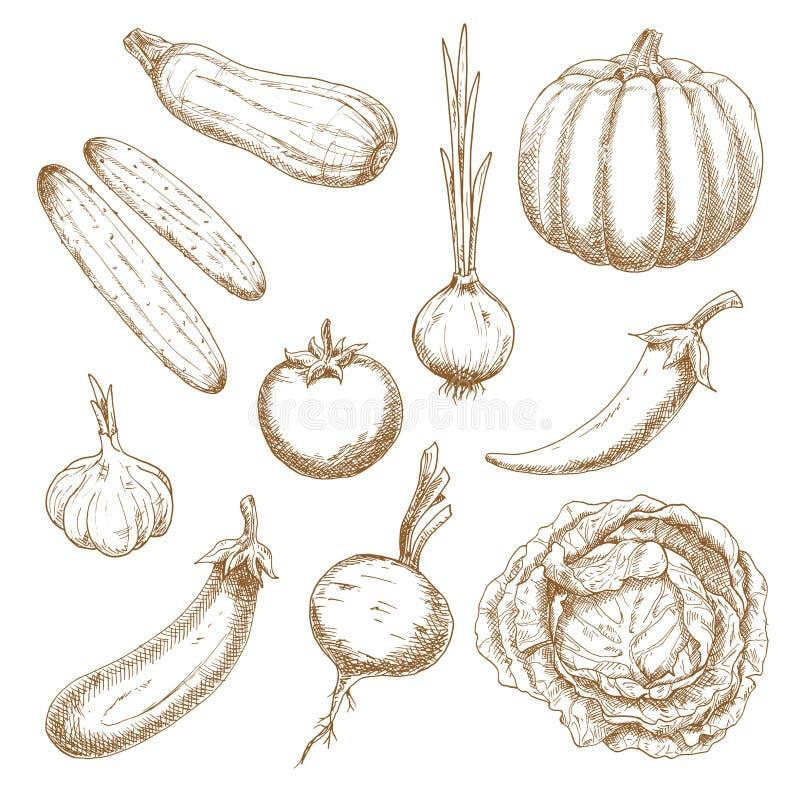 Świeżych warzyw odizolowywający nakreślenia ustawiający royalty ilustracja