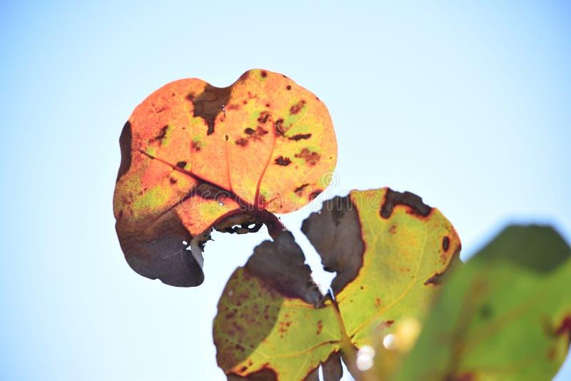 Świecący Denni winogrona Przeciw niebieskiemu niebu zdjęcie stock