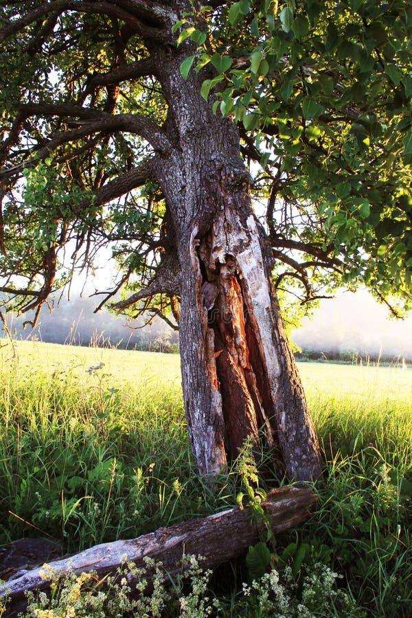 Świecący drzewo zdjęcie royalty free