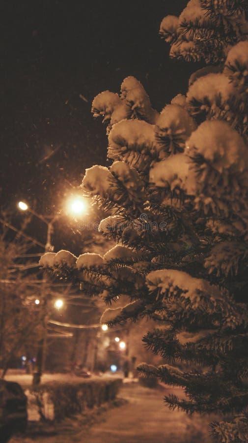 Świerczyna w śniegu obrazy stock