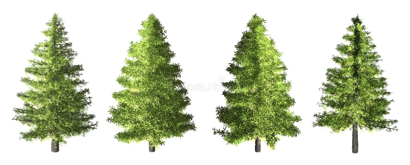 Świerkowy drzewo odizolowywający na białym tle z ścinek ścieżką obrazy stock