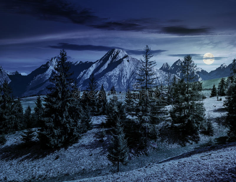 Świerkowy las na trawiastym zboczu w tatras przy nocą ilustracji