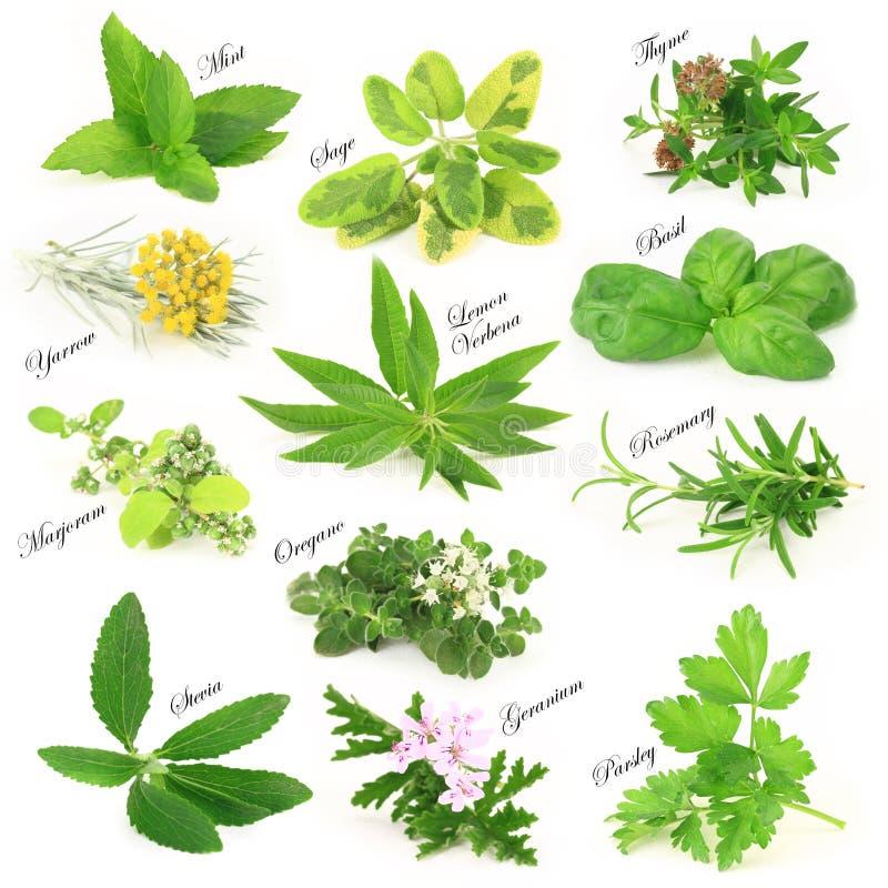 Świezi aromatyczni ziele zdjęcie royalty free