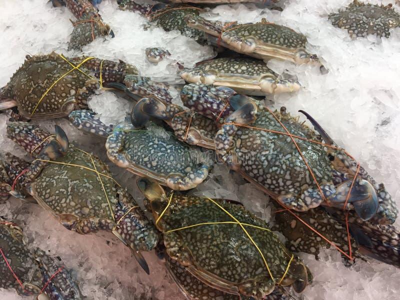 świezi błękitny kraby obrazy royalty free
