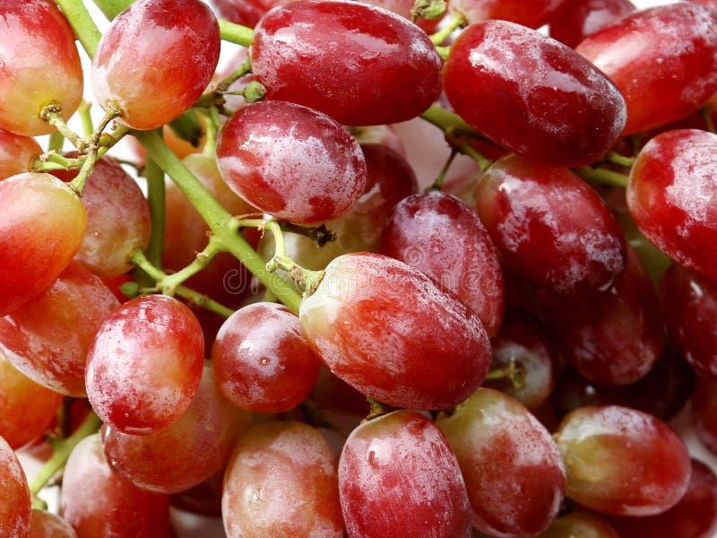 Świezi Błyszczący Soczyści Czerwoni winogrona obrazy royalty free