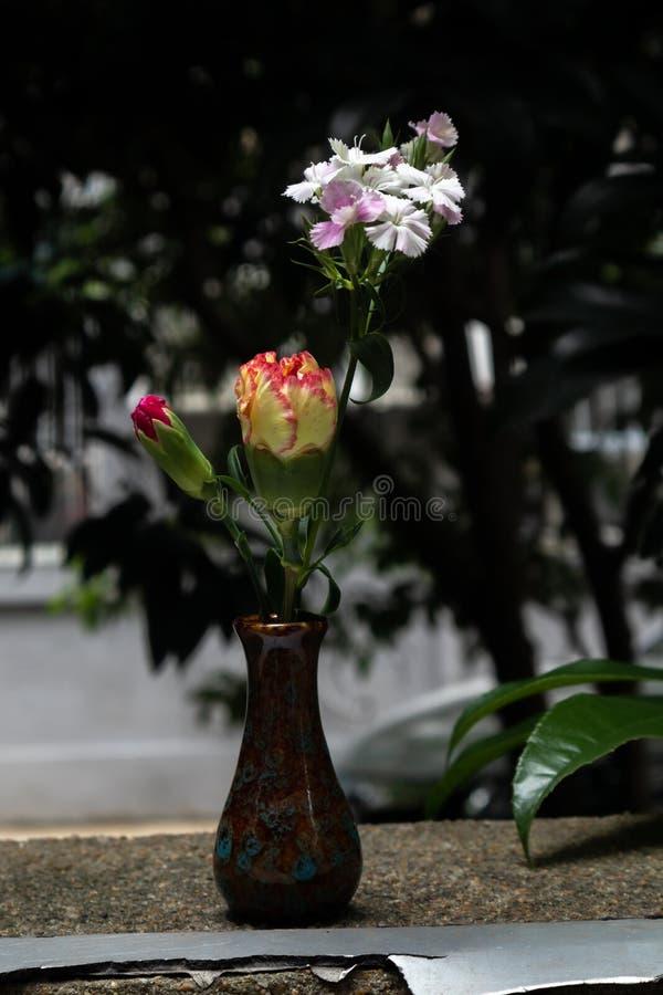 świezi cięcie kwiaty zdjęcie stock