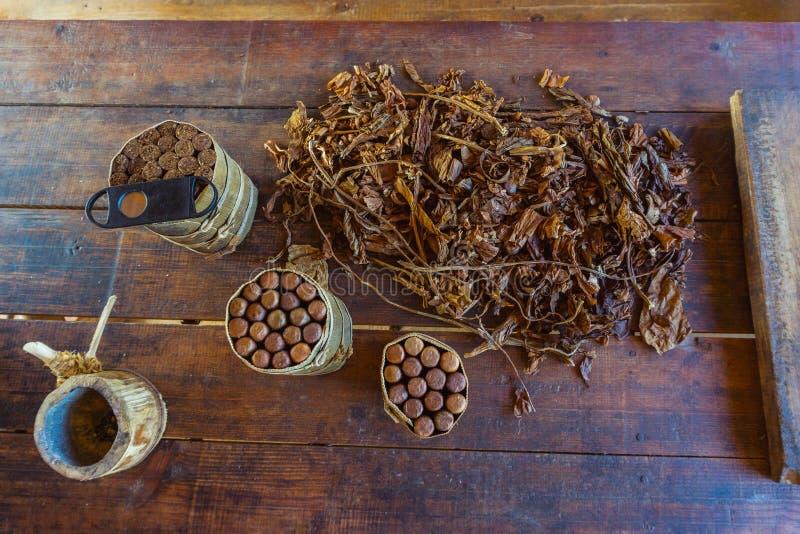 Świezi cygarowego tytoniu liście, Kubańska kultura obraz royalty free