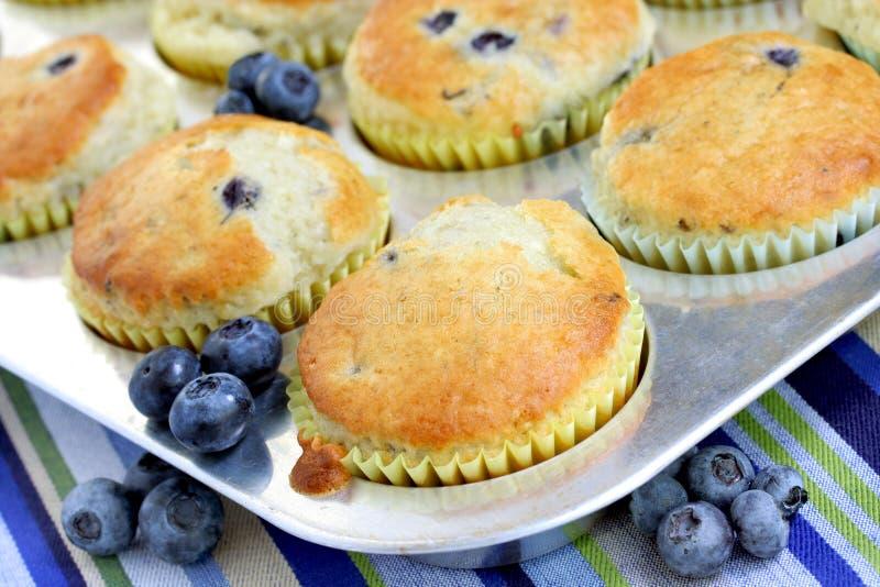 świezi czarnych jagod piec muffins fotografia stock