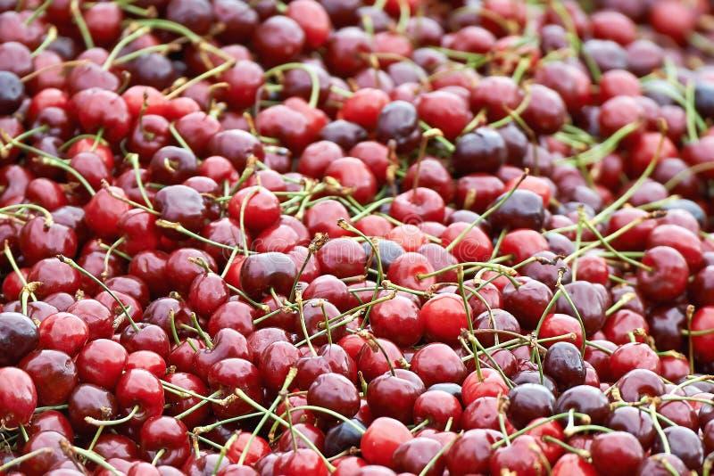 Świezi czerwoni cherrys obraz stock