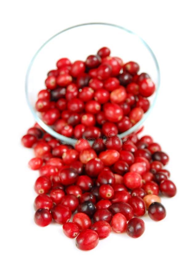 Cranberries w pucharze obraz royalty free