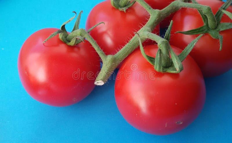 Świezi czerwoni czereśniowi pomidory nad błękitem Zdrowi warzywa pomidory organicznych zdjęcia stock