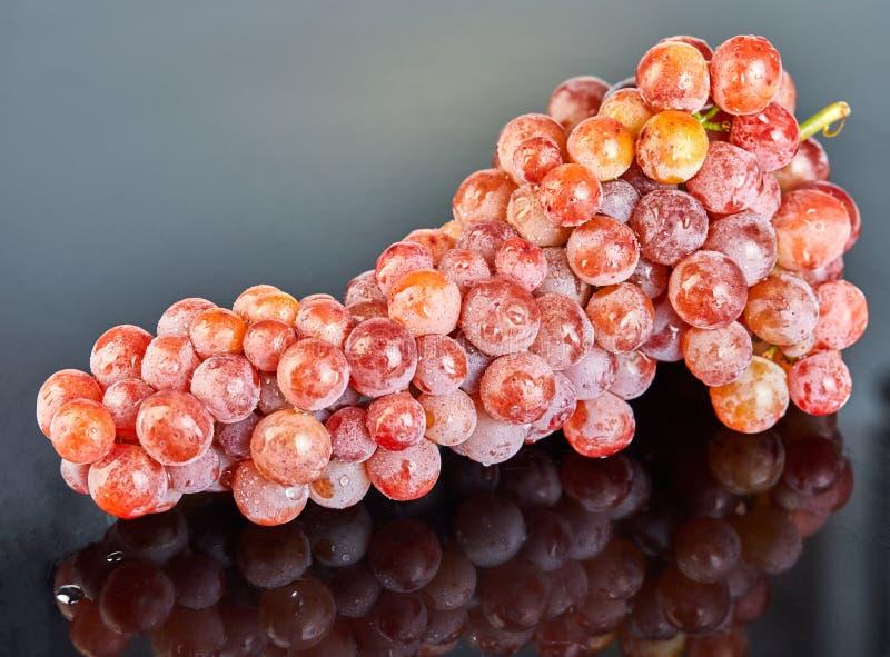 Świezi czerwoni winogrona z wodnymi kroplami na szarym tle obrazy stock