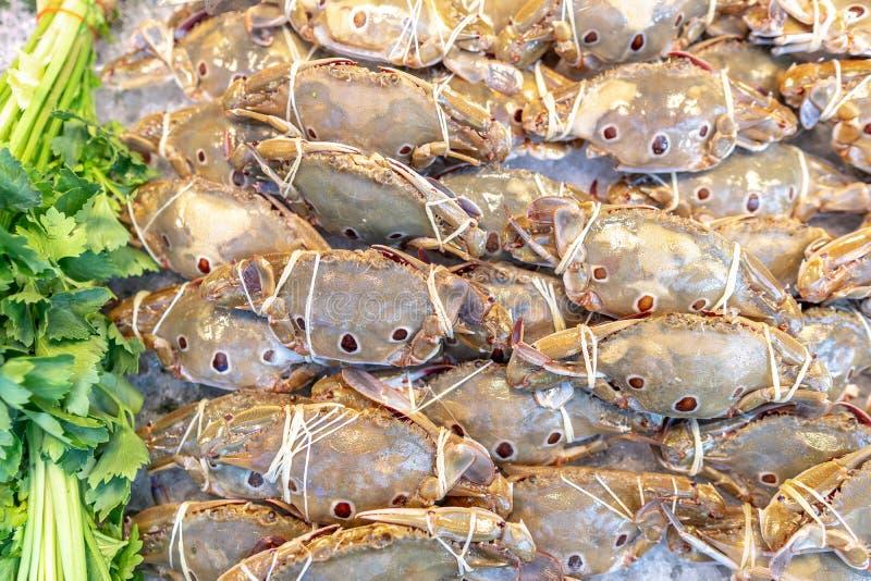 Świezi denni końscy kraby przygotowywać jedzenie zdjęcia royalty free