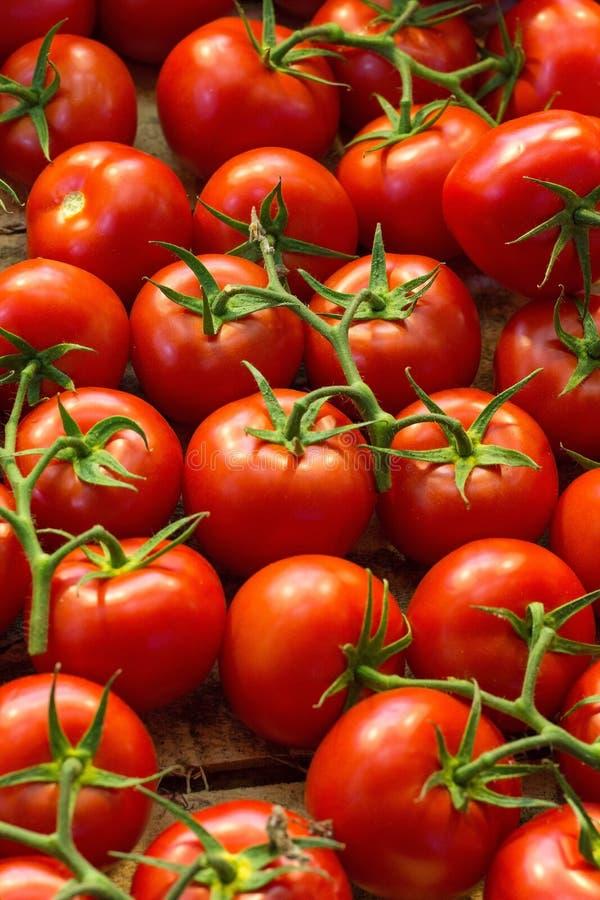 Świezi dojrzali czerwoni pomidory w rynku fotografia stock