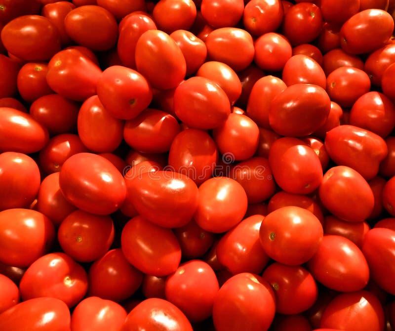świezi dojrzali pomidory zdjęcia royalty free
