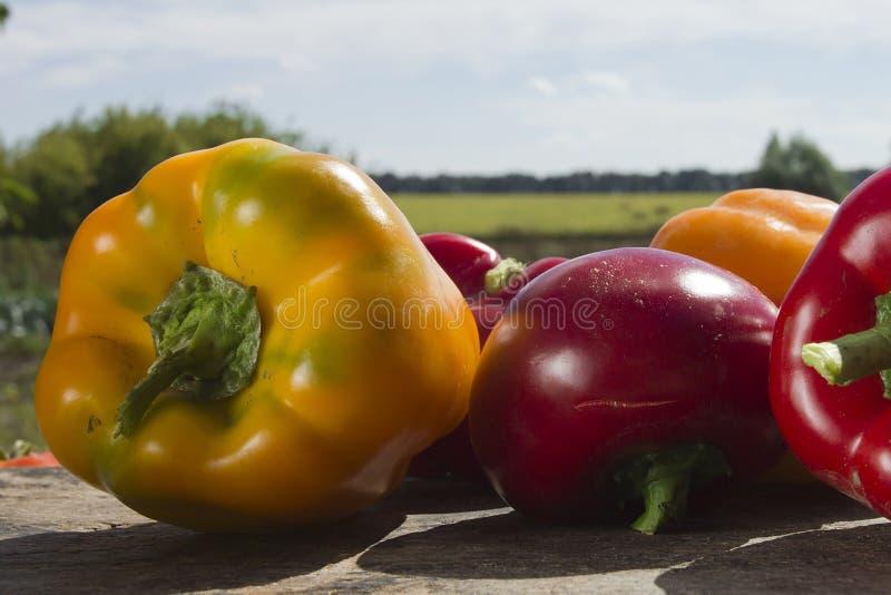 Świezi dojrzali warzywa obrazy royalty free