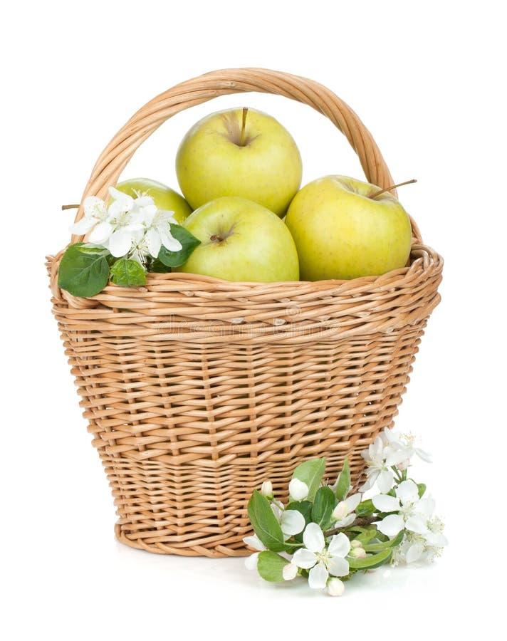 Świezi dojrzali zieleni jabłka w koszu fotografia royalty free