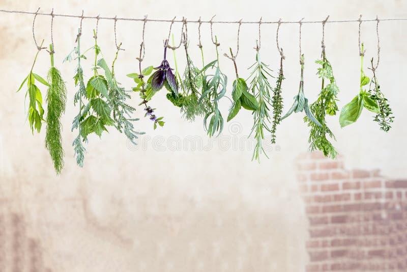 Świezi flovouring ziele i eatable kwiaty wiesza na sznurku przed starym, stonewall backgroung zdjęcia royalty free