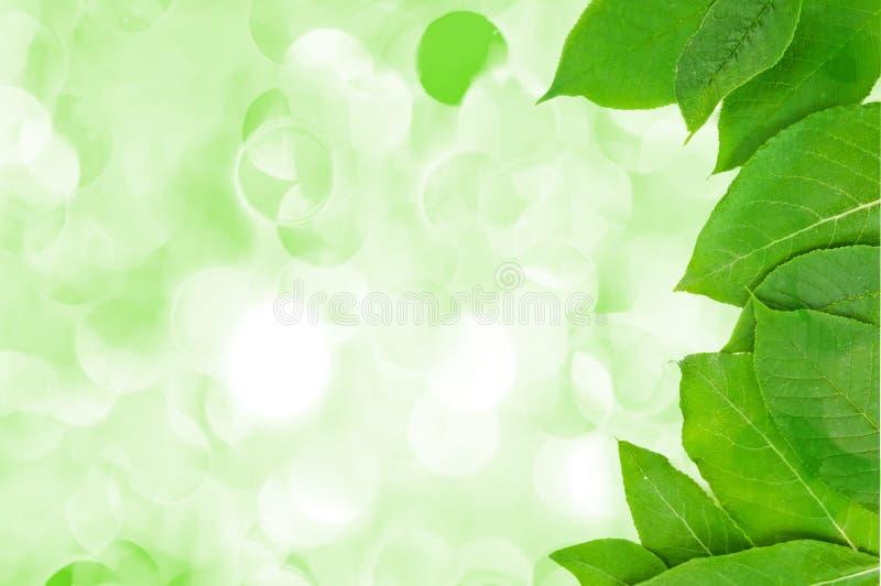 Świezi i zieleni liść obrazy royalty free