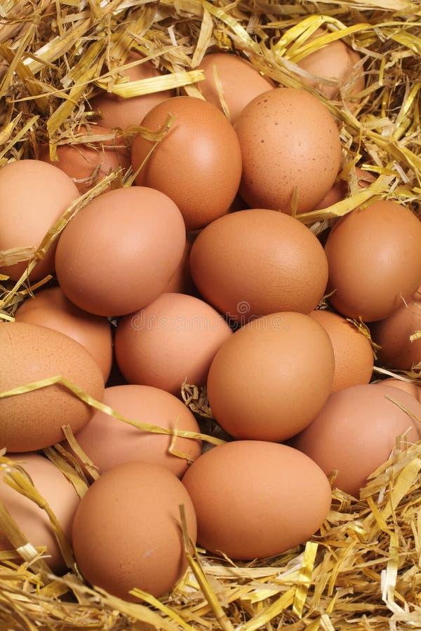 Świezi jajka zdjęcia royalty free