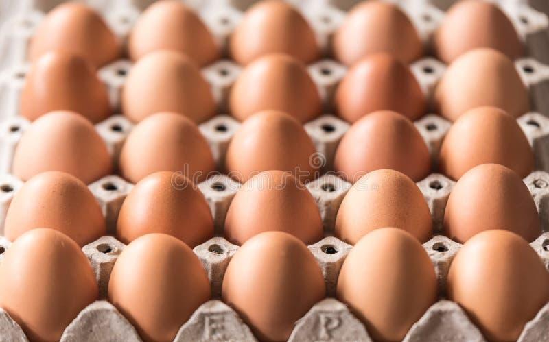 Świezi jajka fotografia royalty free
