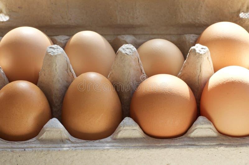 świezi kartonów jajka zdjęcie royalty free