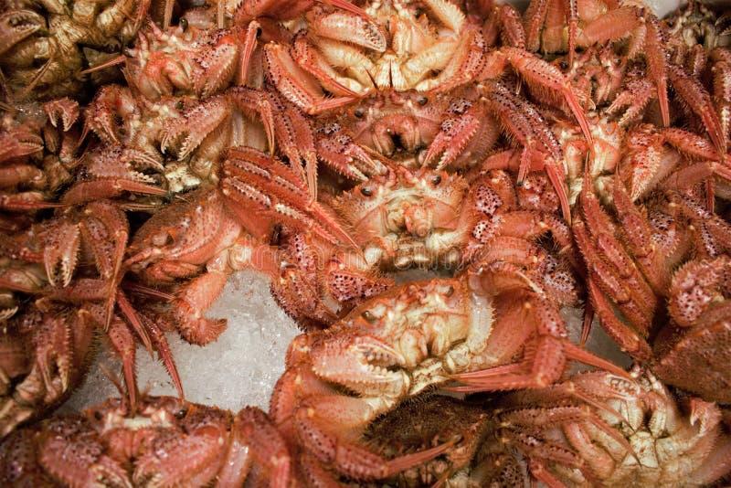 Świezi kraby przy Tsukiji rybim rynkiem w środkowym Tokio, Japonia obraz stock