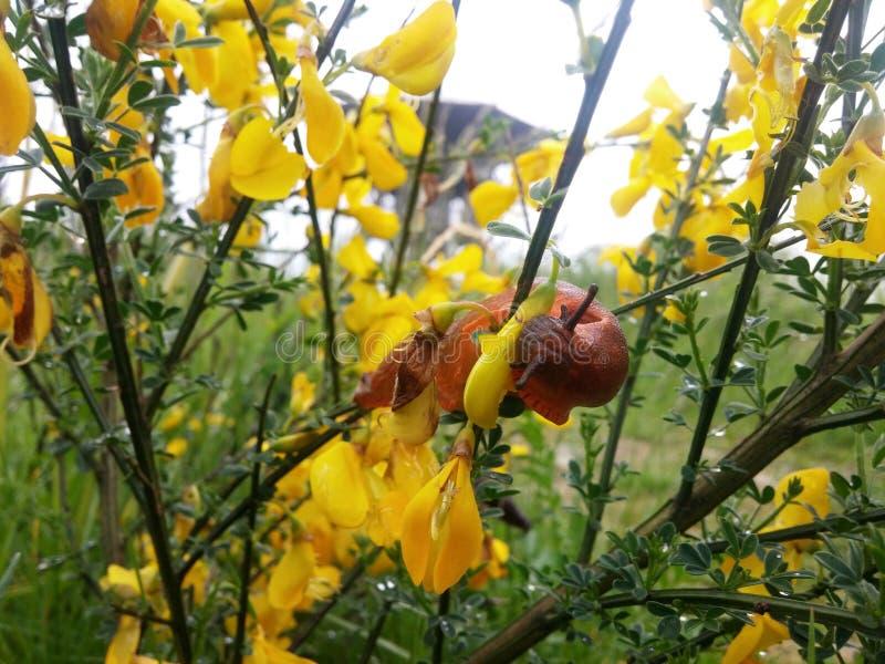 Świezi lato ogródu kwiaty obrazy royalty free