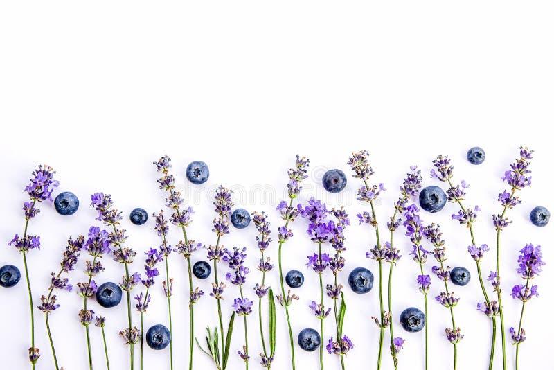 Świezi lawenda kwiaty, czarne jagody na białym tle i Lawenda kwitnie i czarne jagody wyśmiewają up kosmos kopii zdjęcia stock