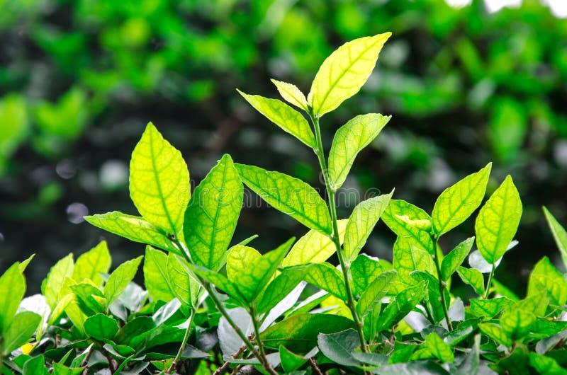 Świezi liście obrazy stock